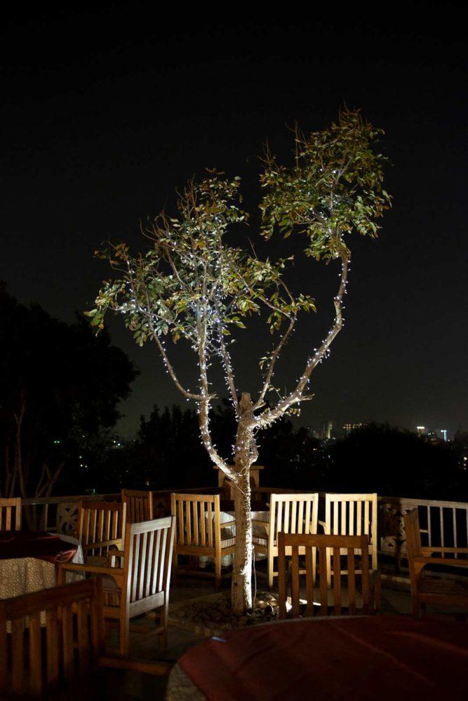 ccphilipa, photo, cairo, egypt, tree, light bulbs,